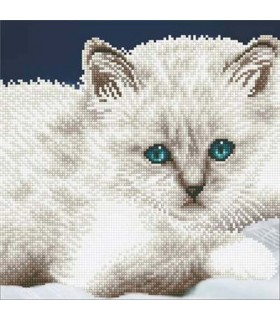 Diamond Art Chat Blanc