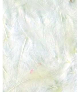 Plumes blanc 3g Artemio